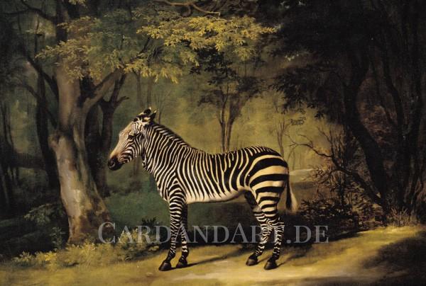 Stubbs: Zebra - Postkarte