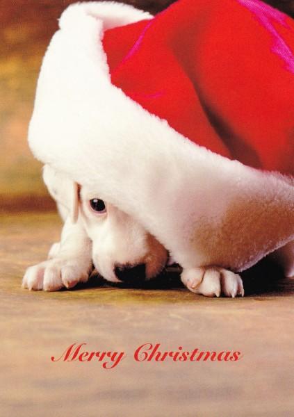 Merry Christmas - Postkarte
