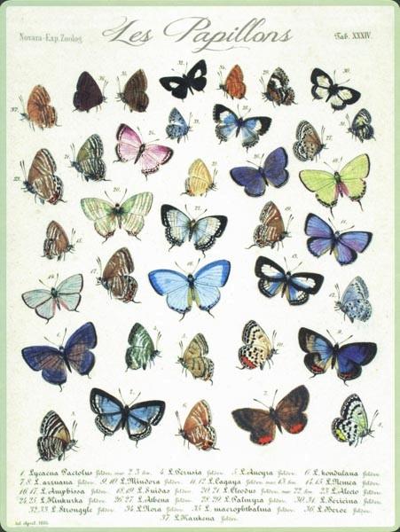 Les Papillons - PosterCard
