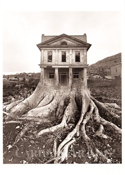 Verwurzeltes Baumhaus - Postkarte