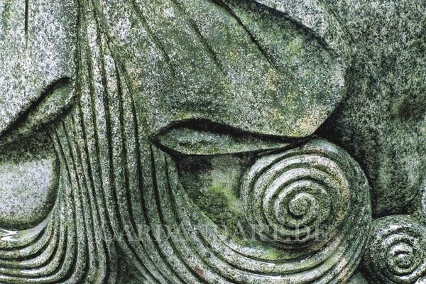 Detail einer Löwenmähne - Postkarte