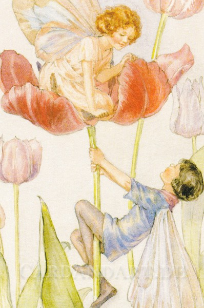 Tarrant Margaret: Tulip Fairies - Postkarte