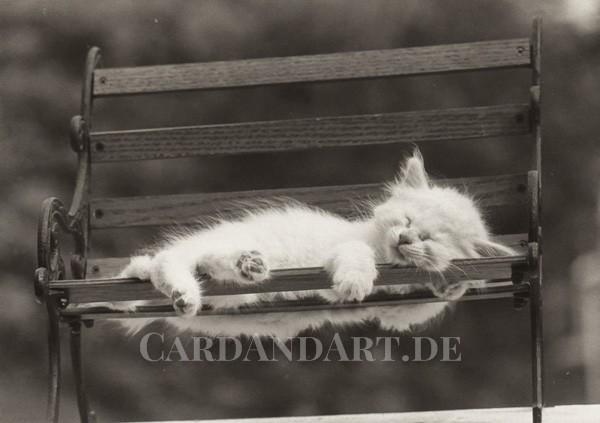 Katzenglück - Postkarte