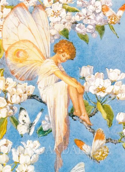 Tarrant Margaret: Pear Blossom Fairy - Postkarte