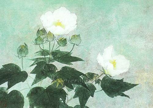 Fukui, Sawato: Confederate Roses - Postkarte