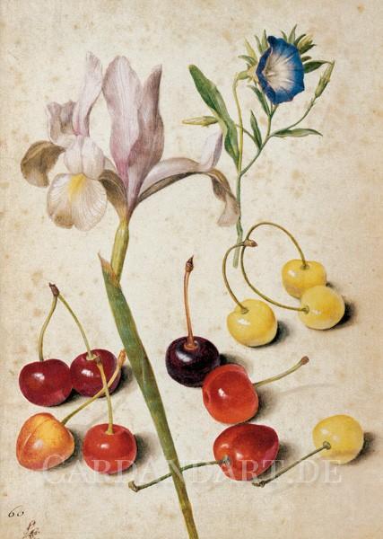 Flegel, Georg - Kirschen, Iris, Winde - Postkarte