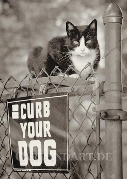 Curb Your Dog - Postkarte