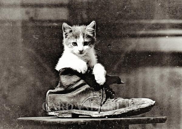 Cat in Boot - Postkarte