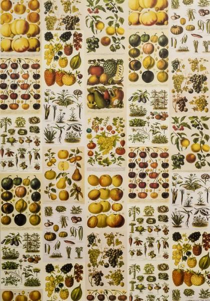 Frutta e Verdura - Poster