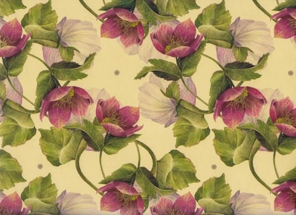 Winter-Rose, Lenzrose, - Geschenkpapier